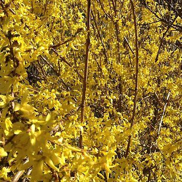 Yellow by DrFrankenbaum