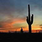 Nite Nite Tucson  by Judy Ann  Grant