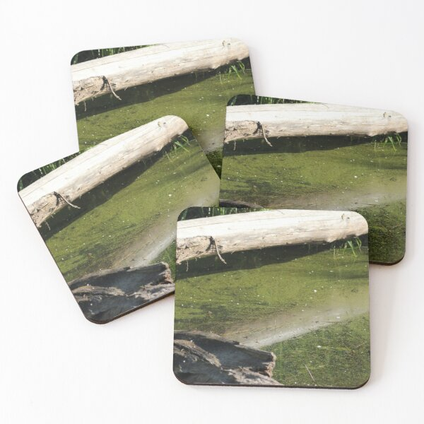 find the frogs, Trojan pond, near Goble, Oregon Coasters (Set of 4)