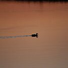 Sunset at Scaling dam by dougie1