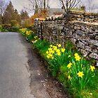 Daffodils in Orton Village by Tom Gomez