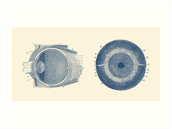 Láminas artísticas «Diagrama de anatomía del ojo humano - Vista ...