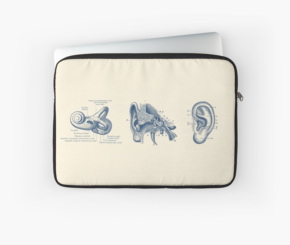 Human Ear Anatomy Diagram Laptop Sleeves By Vaposters Redbubble