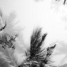 Monochrome Palms by Shari Mattox-Sherriff