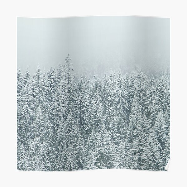 Snowy Tree Tops Poster