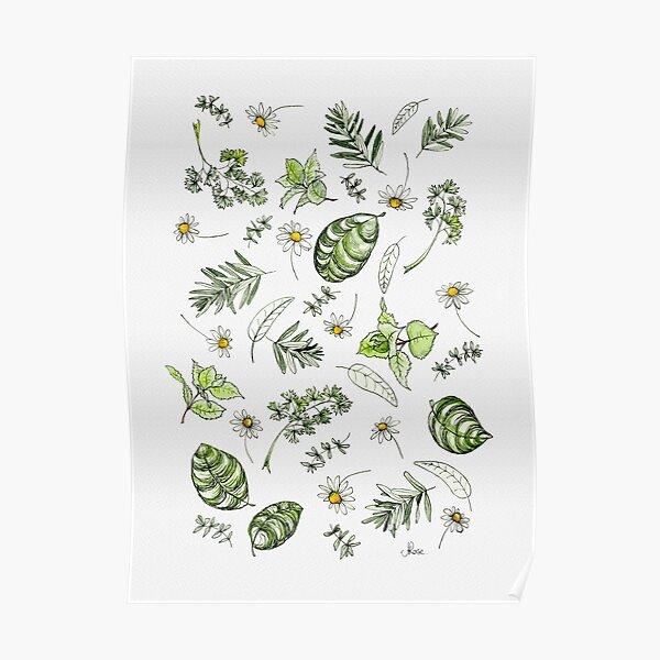 Scattered Garden Herbs Illustration Poster