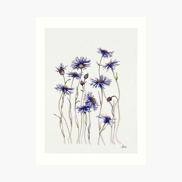Blue Cornflowers Lámina artística