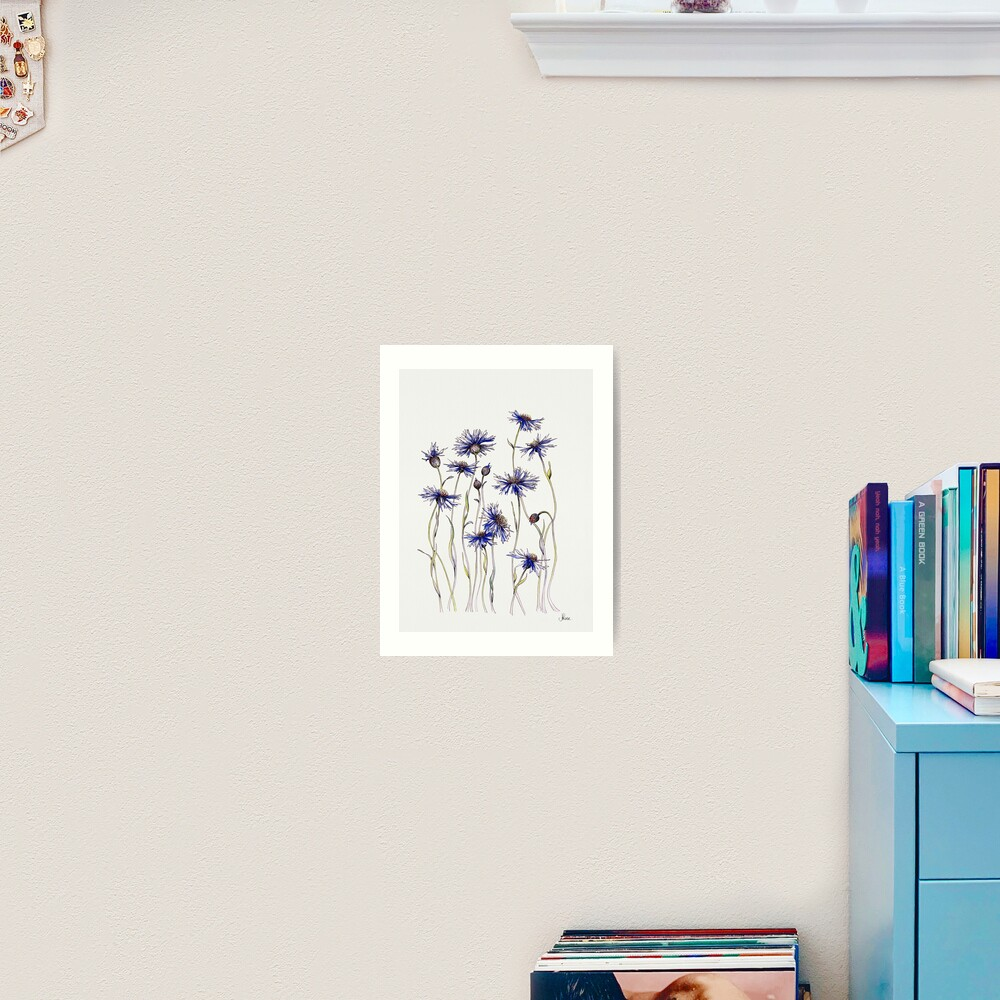 Blue Cornflowers  Art Print