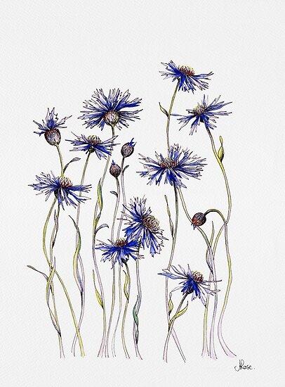 Blaue Kornblumen von JRoseDesign