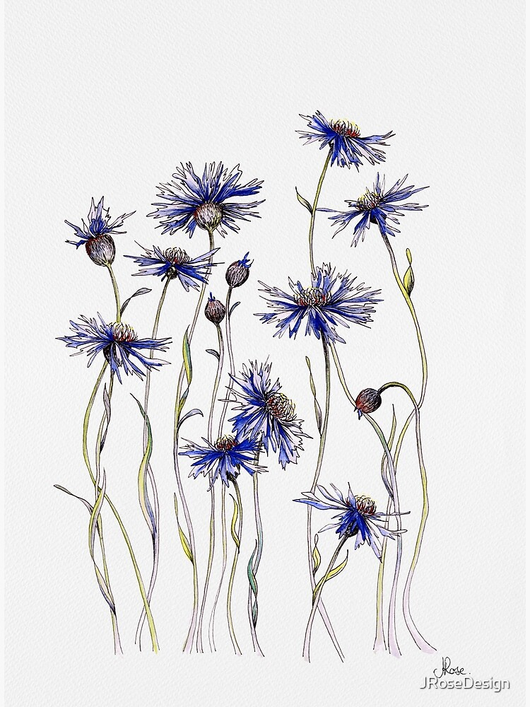 Blue Cornflowers  by JRoseDesign