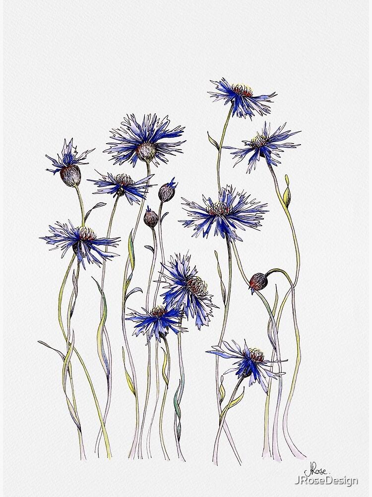 Blue Cornflowers  by JRoseDesign