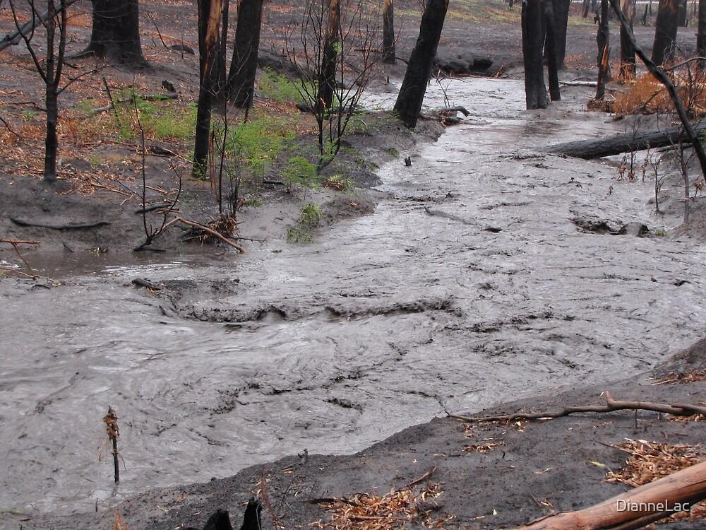 Black water of Diamond Creek by DianneLac