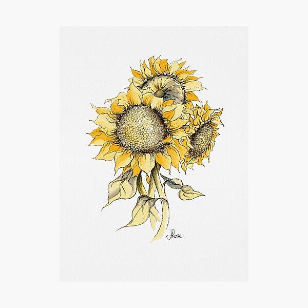 Yellow Sunflowers Photographic Print