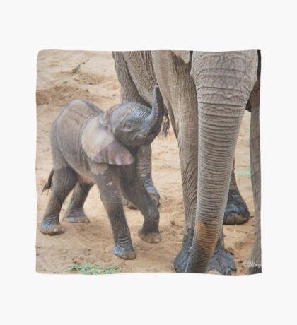 I AM HUNGRY - BABY ELEPHANT -  THE AFRICAN ELEPHANT – Loxodonta Africana Scarf