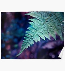 Tranquil Fern Poster