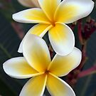 Tropical Paradise by Sarah Donoghue