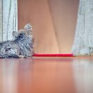 [Waiting for you…] by Jakov Cordina