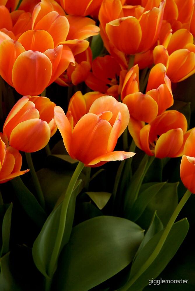 Orange Tulips by gigglemonster