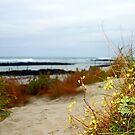 Beach Path  by cjcphotography