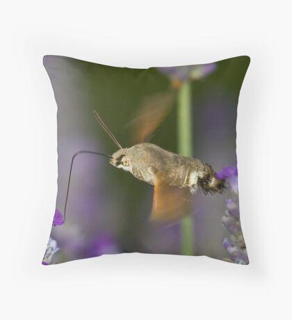 Humming Bird Moth 5 Throw Pillow