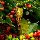 Color of Coffee by Richard G Witham