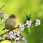 Little Sparrow by Morag Bates