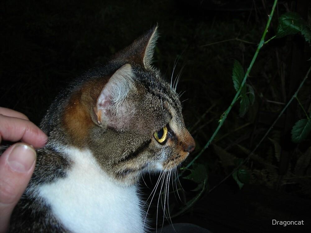 my Cat friend by Dragoncat