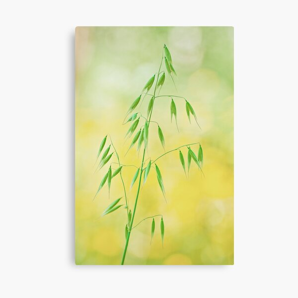 Nature is simplicity Canvas Print