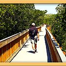 Hike Through The Mangroves by glink