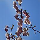 Spring feeling by Steve plowman