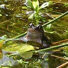 Peeping Froggie by ienemien