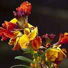 Wallflower by Steve plowman