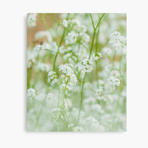 White flowers garden Canvas Print