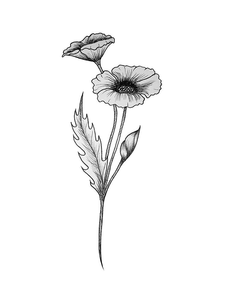 Poppy Flower Drawing Illustration Line Work By Tamara Kajper