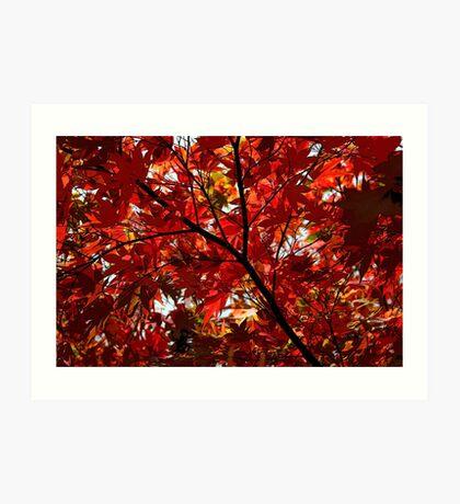 Shades Of Autumn Art Print