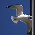 WalMart Seagull by BigD