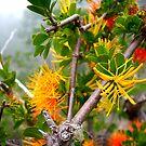 Native flowers. by Francisco Larrea