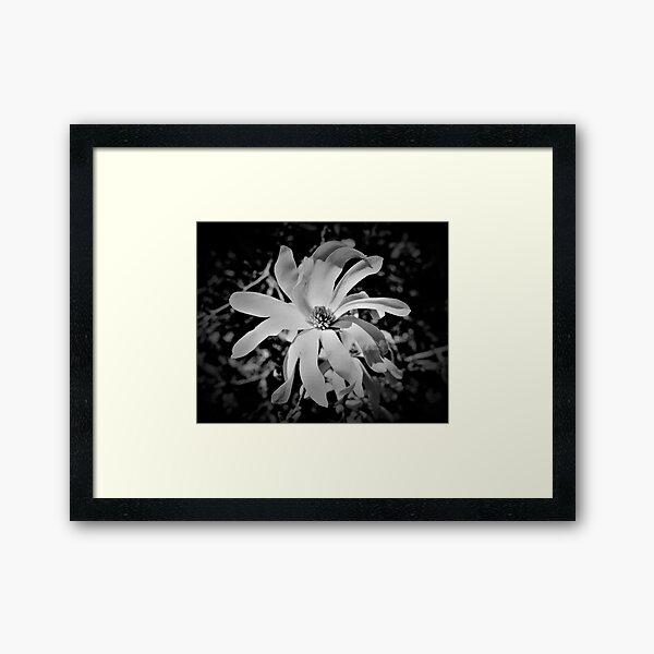 Magnolia Blosson I Framed Art Print