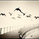Wild geese by Lenka