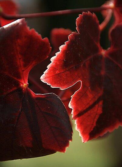 Autumn by Basia McAuley