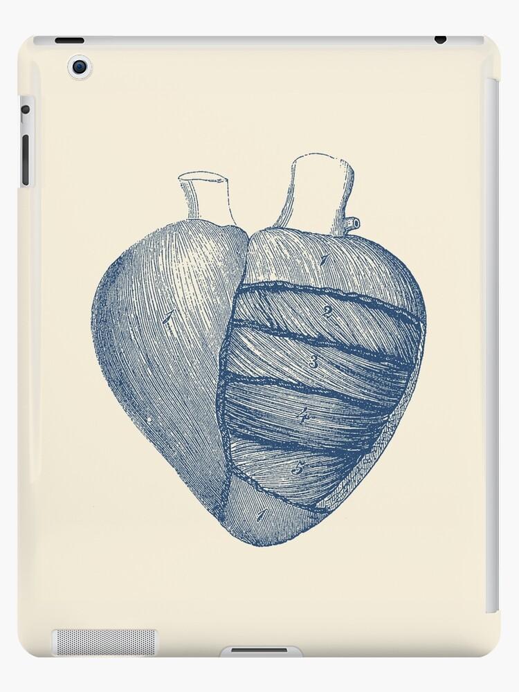 Encantador Diagrama De La Anatomía Componente - Anatomía de Las ...