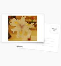 Softie Postcards