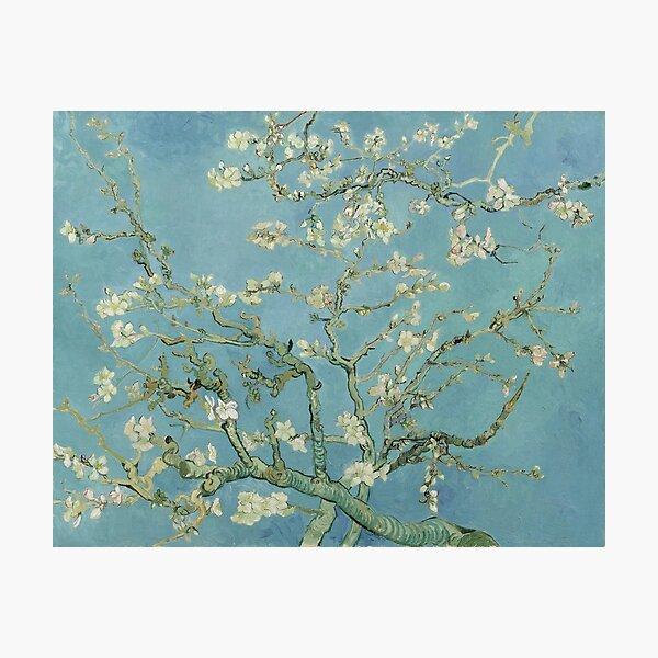 Almond Blossom  Vincent van Gogh - Famous post impressionism fine art oil painting by Vincent van Gogh. Photographic Print