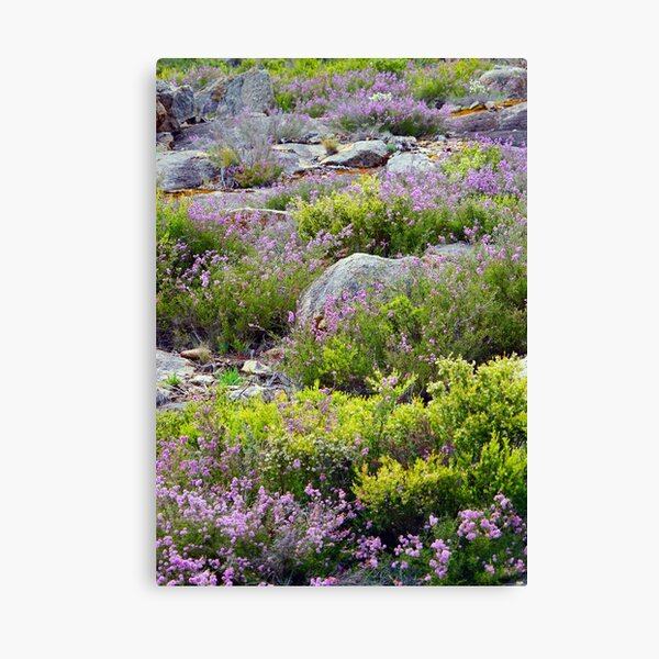 Alpine Garden Canvas Print