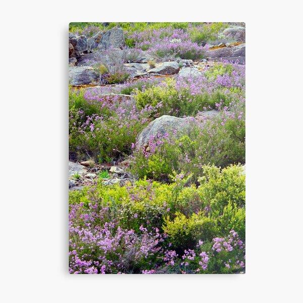 Alpine Garden Metal Print