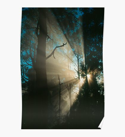 Forest sunrays. Poster