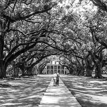 Black and White Timelessness of Oak Alley and what Louisiana.  by biscuitduff