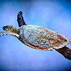 Turtle in the blue by missmoneypenny