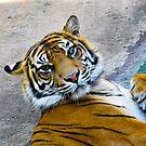 Tiger by hellolen