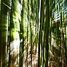 Bamboo zoom. by Laura Cutmore